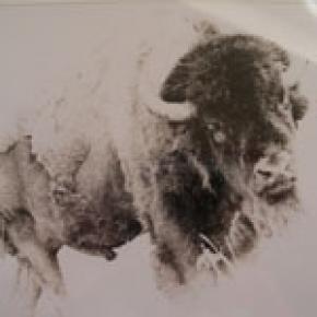 Buffalo Muriel